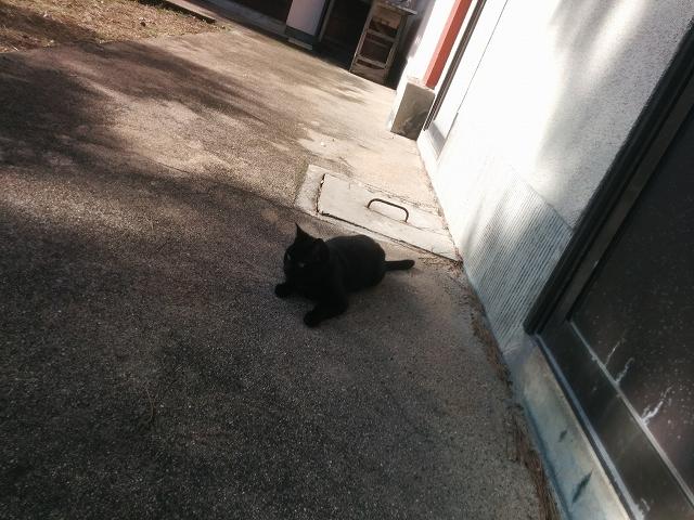 渋川海水浴場 黒猫